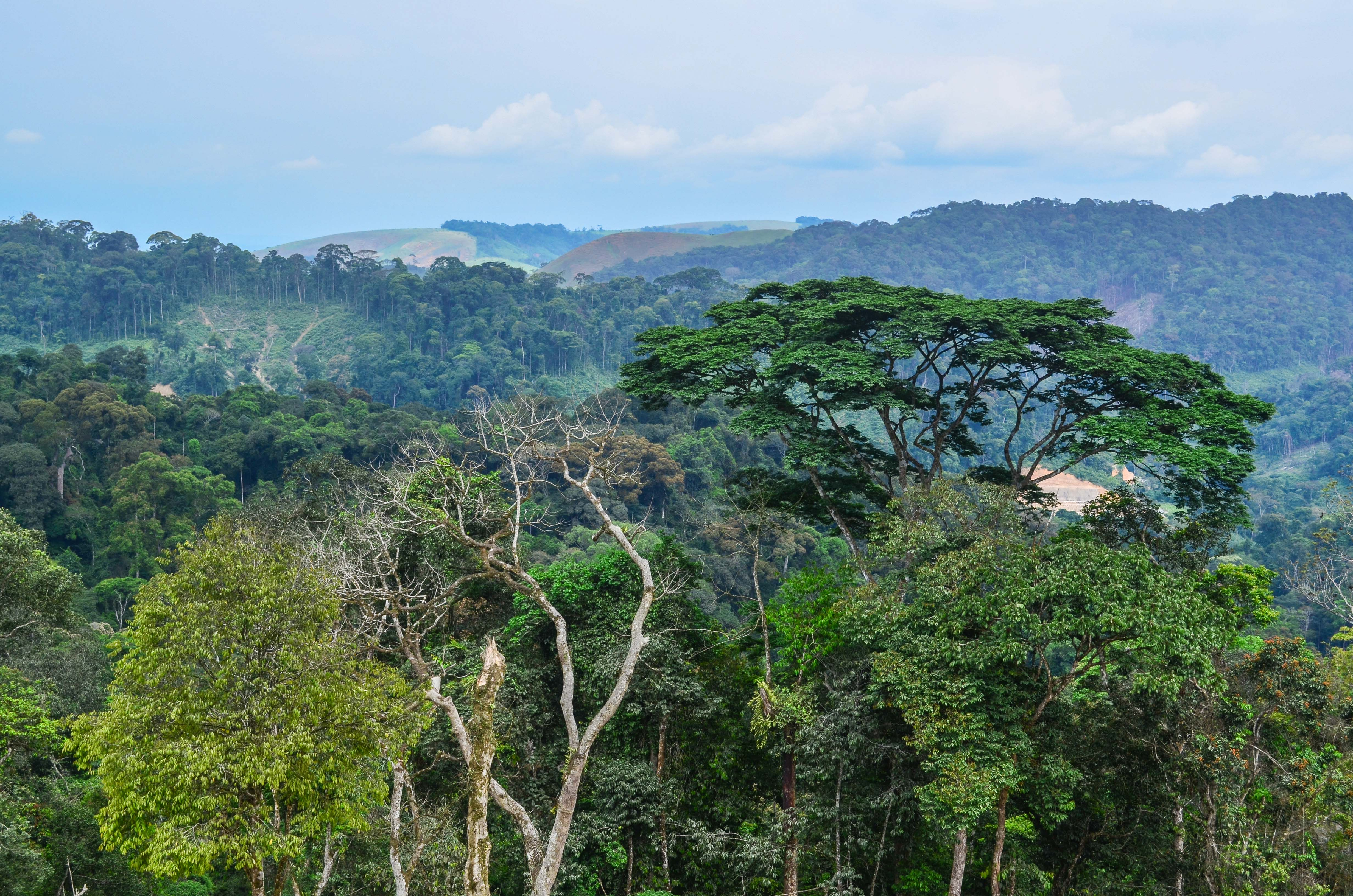 Six-Country Initiative to Protect the Congo Basin
