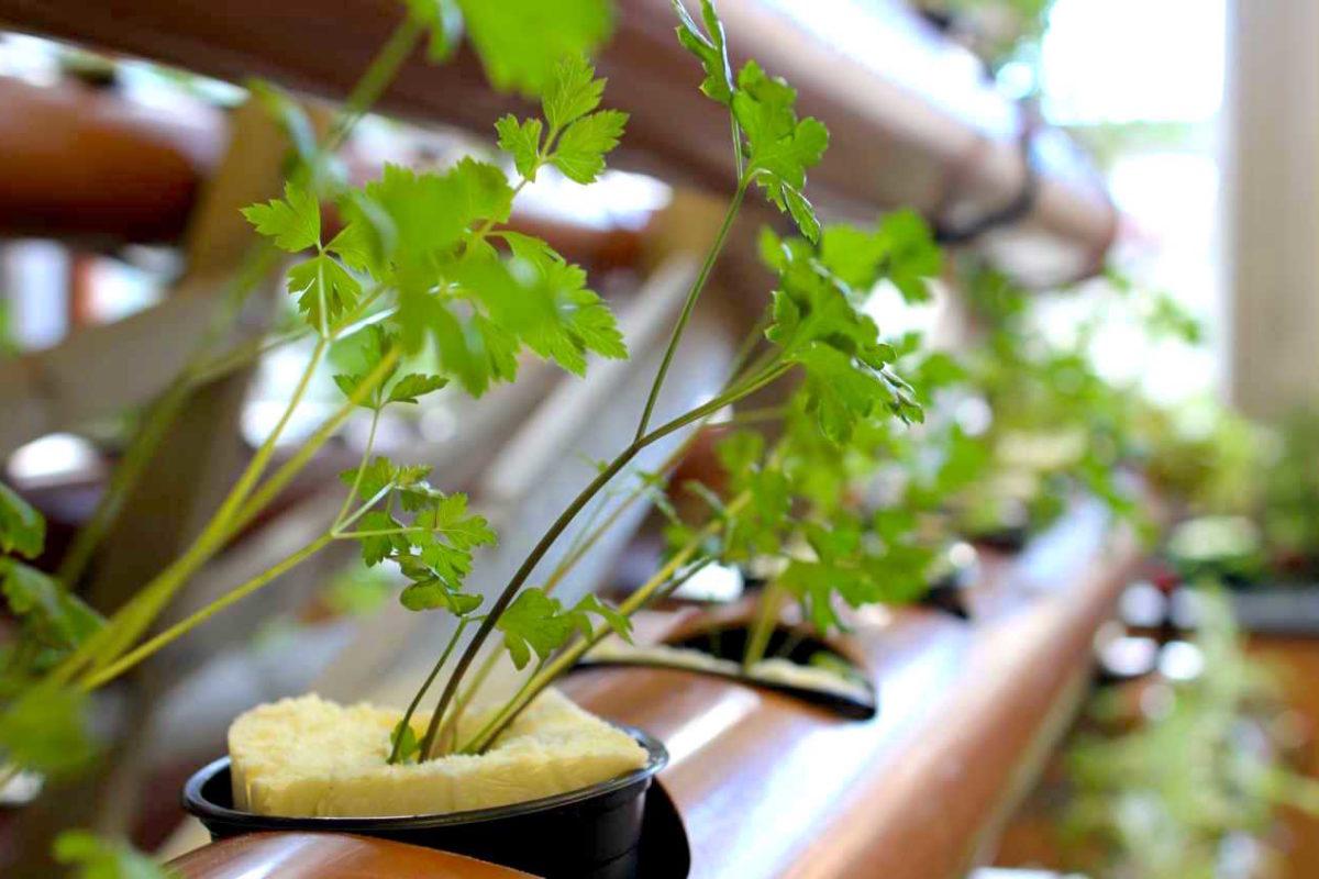 Gemüse auf Matratzen im Flüchtlingslager