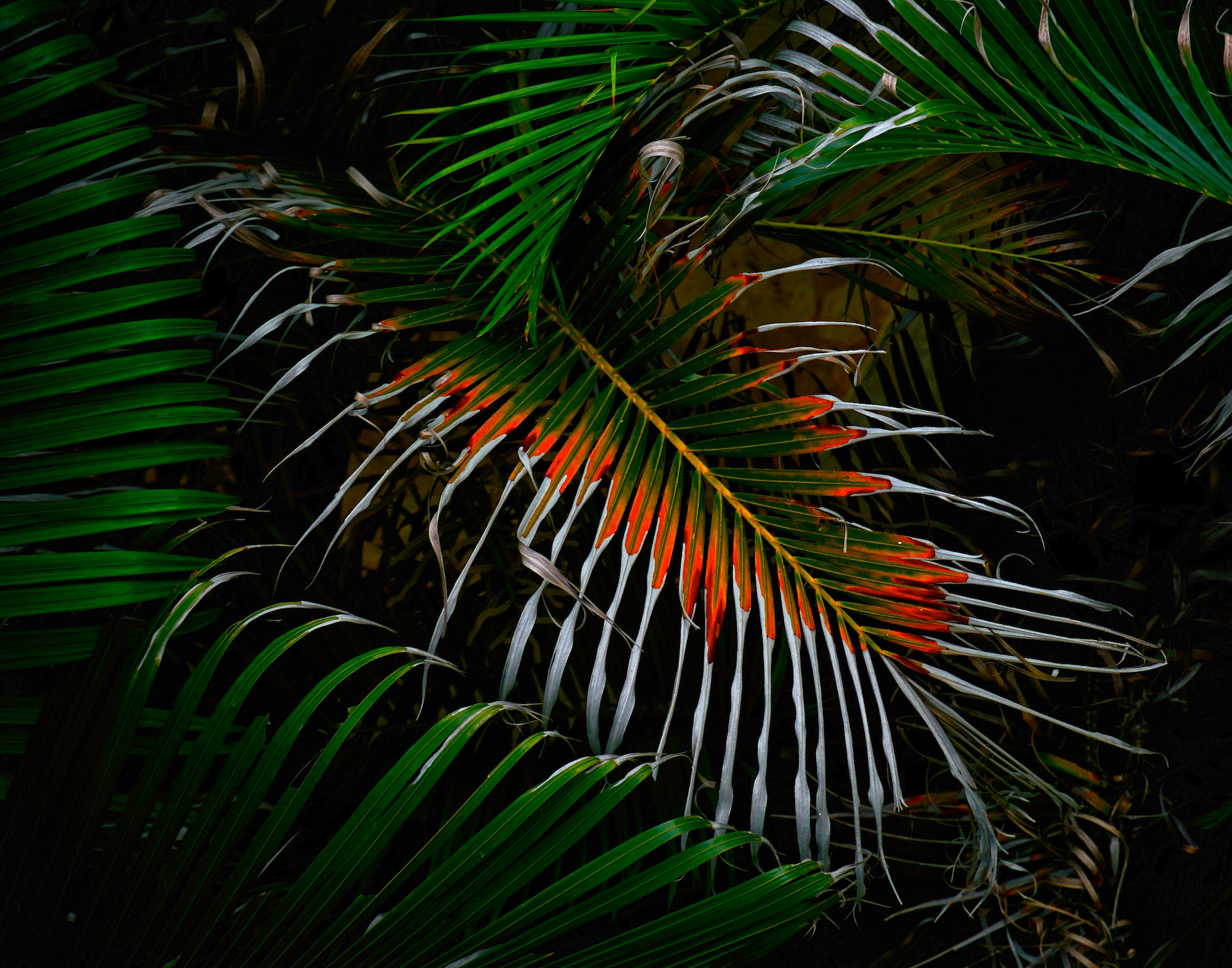 Synthetisches Palmöl