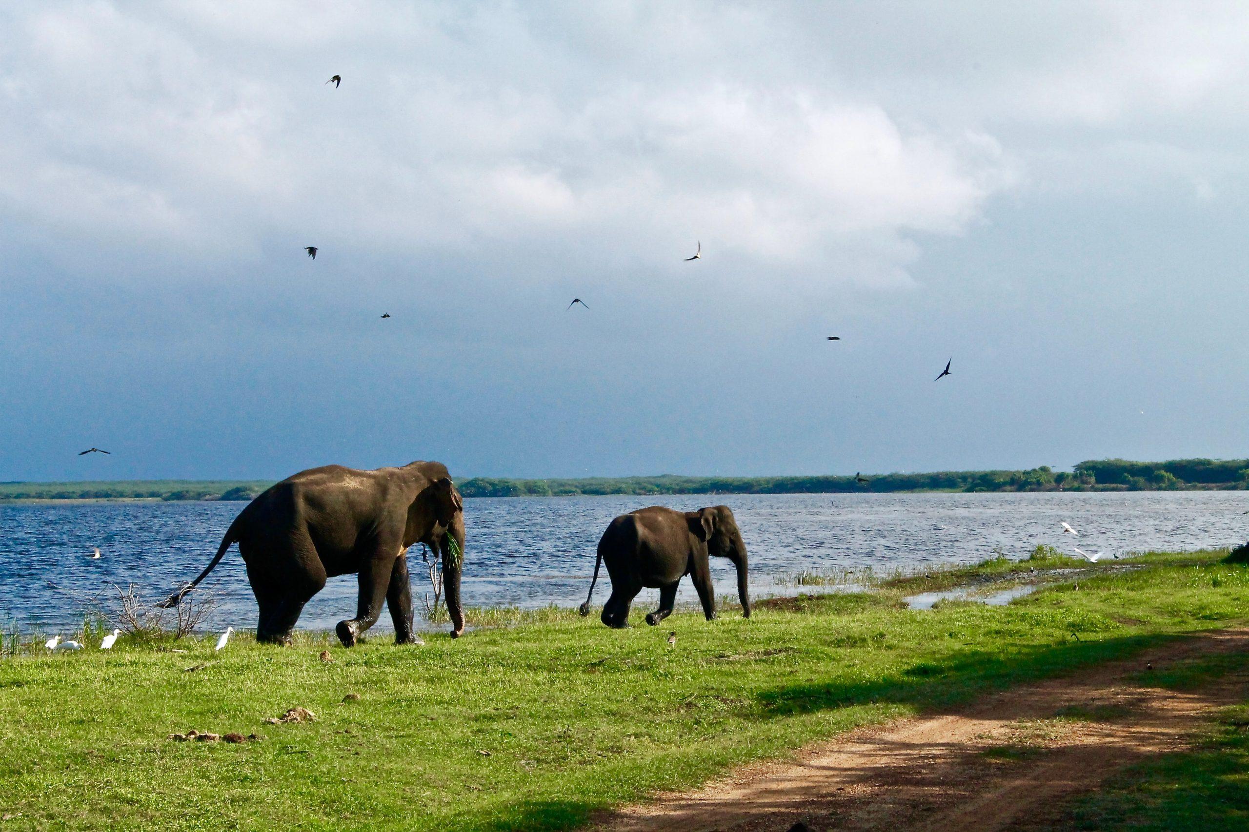 Zwei Elefanten in Sri Lanka
