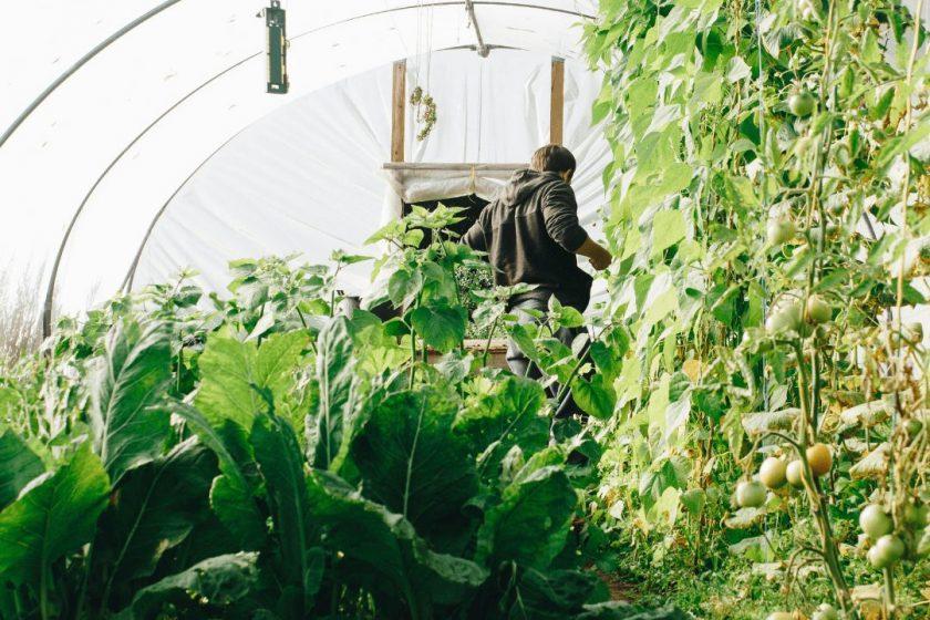 Gewächshaus mit Gemüseanbau