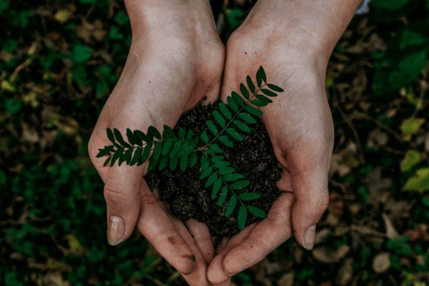 Eine Person hält eine aus Erde entwachsende Pflanze in der Hand.